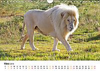 FAZINATION Weiße Löwen (Wandkalender 2019 DIN A4 quer) - Produktdetailbild 3
