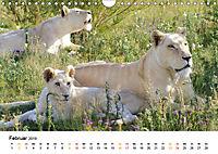 FAZINATION Weiße Löwen (Wandkalender 2019 DIN A4 quer) - Produktdetailbild 2