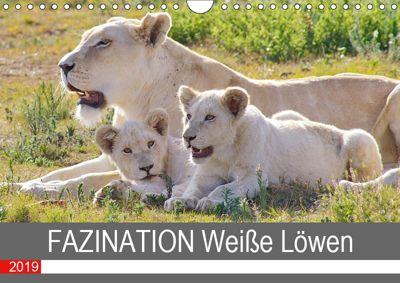 FAZINATION Weiße Löwen (Wandkalender 2019 DIN A4 quer), Thula