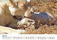 FAZINATION Weiße Löwen (Wandkalender 2019 DIN A4 quer) - Produktdetailbild 7