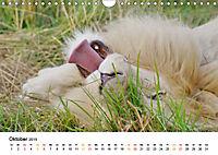 FAZINATION Weiße Löwen (Wandkalender 2019 DIN A4 quer) - Produktdetailbild 10