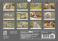 FAZINATION Weiße Löwen (Wandkalender 2019 DIN A4 quer) - Produktdetailbild 13