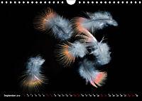 Federleichte Momente (Wandkalender 2019 DIN A4 quer) - Produktdetailbild 9