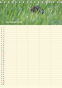Feldhasen - Familienplaner (Tischkalender 2019 DIN A5 hoch) - Produktdetailbild 9