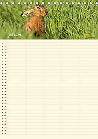Feldhasen - Familienplaner (Tischkalender 2019 DIN A5 hoch) - Produktdetailbild 7