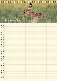 Feldhasen - Familienplaner (Tischkalender 2019 DIN A5 hoch) - Produktdetailbild 12
