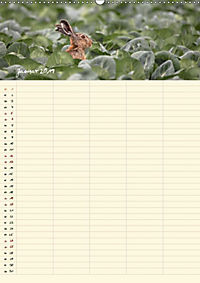 Feldhasen - Familienplaner (Wandkalender 2019 DIN A2 hoch) - Produktdetailbild 11