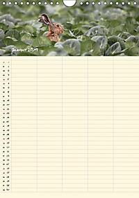 Feldhasen - Familienplaner (Wandkalender 2019 DIN A4 hoch) - Produktdetailbild 3