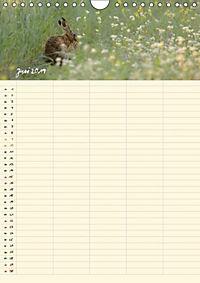 Feldhasen - Familienplaner (Wandkalender 2019 DIN A4 hoch) - Produktdetailbild 2