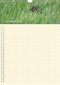 Feldhasen - Familienplaner (Wandkalender 2019 DIN A4 hoch) - Produktdetailbild 12