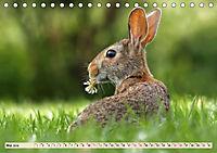 Feldhasen und Kaninchen (Tischkalender 2019 DIN A5 quer) - Produktdetailbild 5