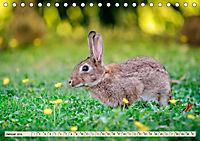 Feldhasen und Kaninchen (Tischkalender 2019 DIN A5 quer) - Produktdetailbild 1