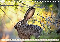 Feldhasen und Kaninchen (Tischkalender 2019 DIN A5 quer) - Produktdetailbild 9