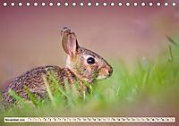 Feldhasen und Kaninchen (Tischkalender 2019 DIN A5 quer) - Produktdetailbild 11