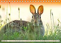 Feldhasen und Kaninchen (Tischkalender 2019 DIN A5 quer) - Produktdetailbild 2