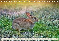 Feldhasen und Kaninchen (Tischkalender 2019 DIN A5 quer) - Produktdetailbild 3