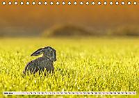 Feldhasen und Kaninchen (Tischkalender 2019 DIN A5 quer) - Produktdetailbild 6