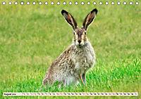 Feldhasen und Kaninchen (Tischkalender 2019 DIN A5 quer) - Produktdetailbild 8
