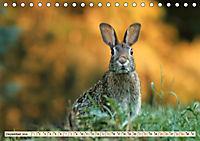Feldhasen und Kaninchen (Tischkalender 2019 DIN A5 quer) - Produktdetailbild 12