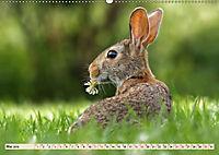 Feldhasen und Kaninchen (Wandkalender 2019 DIN A2 quer) - Produktdetailbild 5