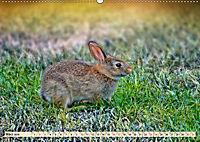 Feldhasen und Kaninchen (Wandkalender 2019 DIN A2 quer) - Produktdetailbild 3