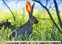 Feldhasen und Kaninchen (Wandkalender 2019 DIN A2 quer) - Produktdetailbild 10
