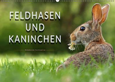 Feldhasen und Kaninchen (Wandkalender 2019 DIN A2 quer), Peter Roder