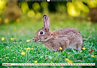 Feldhasen und Kaninchen (Wandkalender 2019 DIN A2 quer) - Produktdetailbild 1