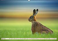 Feldhasen und Kaninchen (Wandkalender 2019 DIN A2 quer) - Produktdetailbild 4