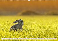 Feldhasen und Kaninchen (Wandkalender 2019 DIN A2 quer) - Produktdetailbild 6