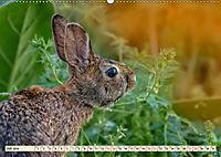 Feldhasen und Kaninchen (Wandkalender 2019 DIN A2 quer) - Produktdetailbild 7