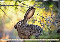 Feldhasen und Kaninchen (Wandkalender 2019 DIN A2 quer) - Produktdetailbild 9