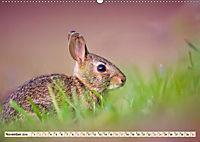 Feldhasen und Kaninchen (Wandkalender 2019 DIN A2 quer) - Produktdetailbild 11