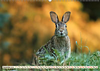 Feldhasen und Kaninchen (Wandkalender 2019 DIN A2 quer) - Produktdetailbild 12