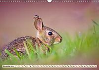 Feldhasen und Kaninchen (Wandkalender 2019 DIN A3 quer) - Produktdetailbild 11