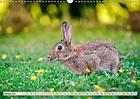Feldhasen und Kaninchen (Wandkalender 2019 DIN A3 quer) - Produktdetailbild 1