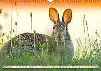 Feldhasen und Kaninchen (Wandkalender 2019 DIN A3 quer) - Produktdetailbild 2