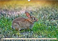 Feldhasen und Kaninchen (Wandkalender 2019 DIN A3 quer) - Produktdetailbild 3