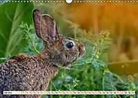 Feldhasen und Kaninchen (Wandkalender 2019 DIN A3 quer) - Produktdetailbild 7