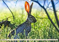 Feldhasen und Kaninchen (Wandkalender 2019 DIN A3 quer) - Produktdetailbild 10