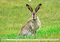 Feldhasen und Kaninchen (Wandkalender 2019 DIN A3 quer) - Produktdetailbild 8