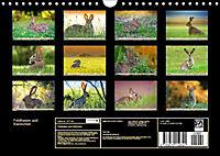 Feldhasen und Kaninchen (Wandkalender 2019 DIN A4 quer) - Produktdetailbild 13