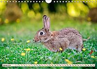 Feldhasen und Kaninchen (Wandkalender 2019 DIN A4 quer) - Produktdetailbild 1