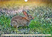 Feldhasen und Kaninchen (Wandkalender 2019 DIN A4 quer) - Produktdetailbild 3