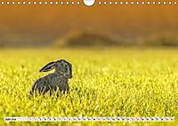 Feldhasen und Kaninchen (Wandkalender 2019 DIN A4 quer) - Produktdetailbild 6