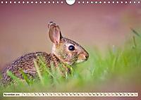Feldhasen und Kaninchen (Wandkalender 2019 DIN A4 quer) - Produktdetailbild 11