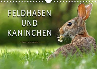 Feldhasen und Kaninchen (Wandkalender 2019 DIN A4 quer), Peter Roder