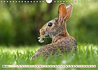 Feldhasen und Kaninchen (Wandkalender 2019 DIN A4 quer) - Produktdetailbild 5