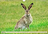 Feldhasen und Kaninchen (Wandkalender 2019 DIN A4 quer) - Produktdetailbild 8