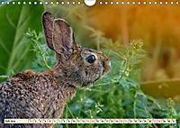 Feldhasen und Kaninchen (Wandkalender 2019 DIN A4 quer) - Produktdetailbild 7